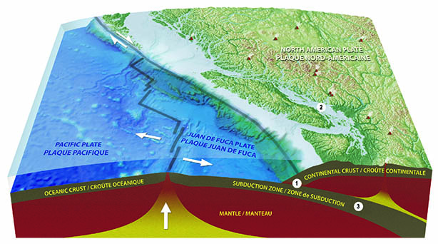 Graphic of the subduction zone, continental crust, ocean crust, Pacific plate, Jaun de Fuca Plate, and North American plate