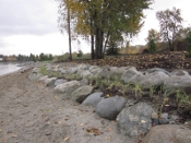 Jericho Beach plantings