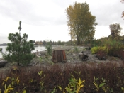 Jericho Beach riparian plantings