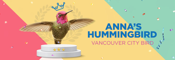 City of Vancouver's official City Bird, the Anna's Hummingbird.