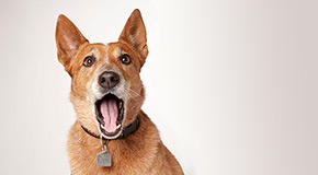 The Animal Control Bylaw does not allow barking dogs to unduly (excessively) bother someone at any time of day.