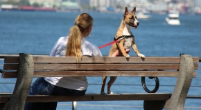 Dog on bench with owner