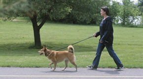Volunteer your time by walking a dog