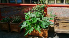 Rooftop garden created by Evelyne Saller Centre volunteers