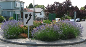 Green Streets garden on a traffic circle