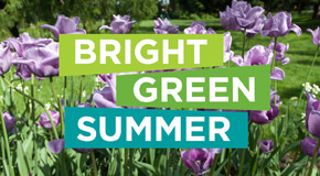 A bright green summer