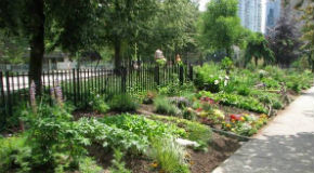The community garden at Nelson Park