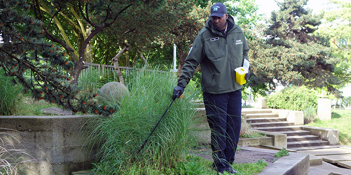 A male park ranger safely disposes of a needle that was discarded in decorative grasses