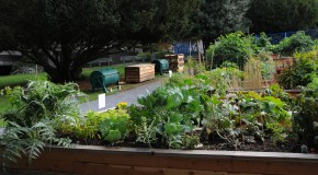 city hall community garden