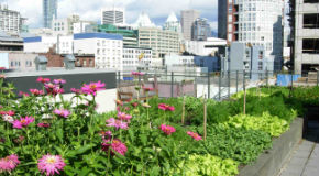 Garden on a Vancouver rooftop