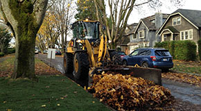 Leaves being cleared from the street