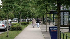Trees on Streets Vancouver