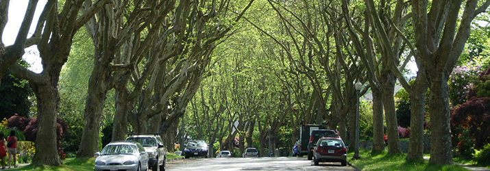 A tree lined street in Vancouver