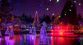 Christmas lights strung up on trees surrounding a pond at VanDusen Botanical Garden