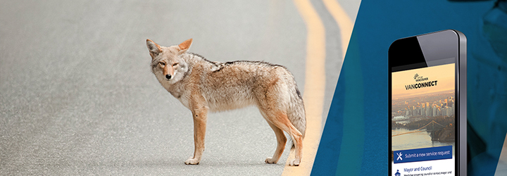 Use our app to report wildlife issues in Vancouver.
