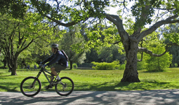 Person riding bicycle under tree