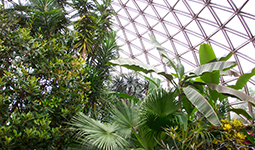 Bloedel Conservatory location and hours