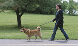Person walking a dog in Vancouver, BC