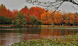 John Hendry Park and Trout Lake