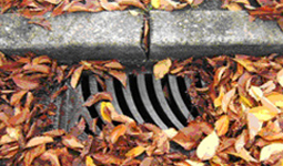 Leaves around sewer drain