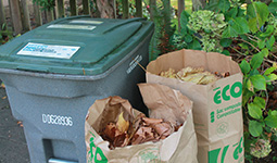 Green bin and yard waste